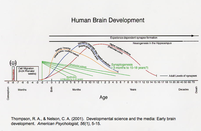 Brain development Chart