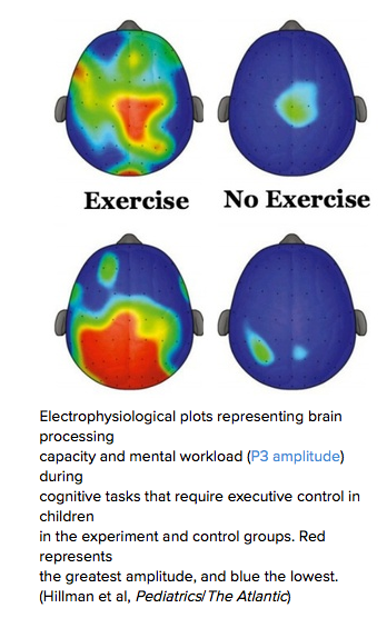 Two brains: One Exercise, the other no exercise